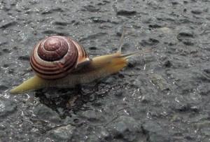 Snail, Trepassey